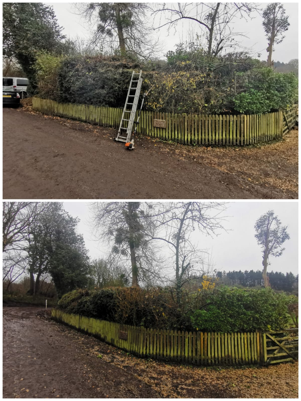 Mixed evergreen hedging reduction near Shaftesbury, Dorset