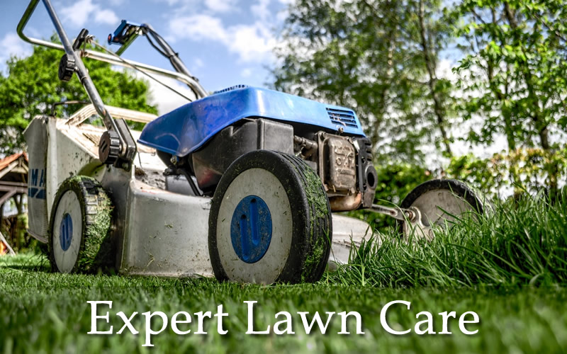 Lawn care and lawn mowing or grass cutting