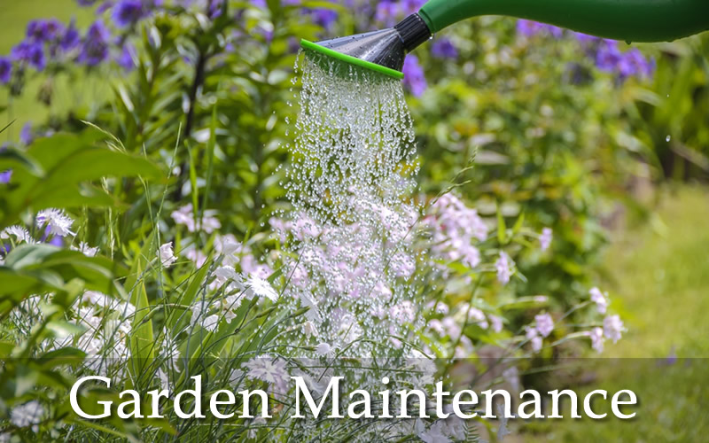 Watering the flowers and general garden maintenance